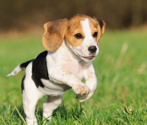 Psy – opieka, wyprowadzanie